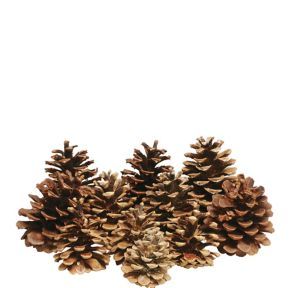 Cinnamon Scented Pinecones 16ct
