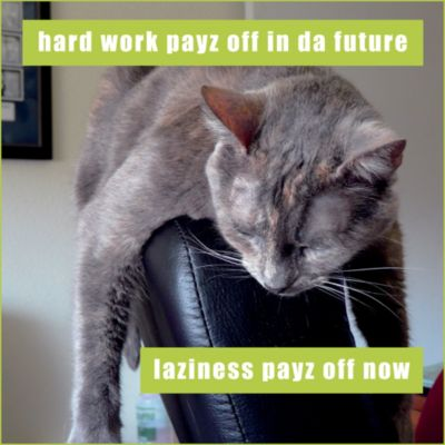Laziness Payz Off Lolcats Magnet