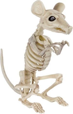Skeleton Rat