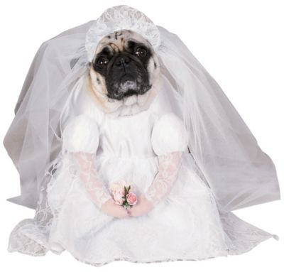 Bride Dog Costume