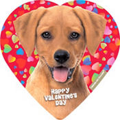 Cuddly Puppy Heart Box of Chocolates 4pc