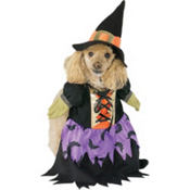 Bewitched Dog Costume