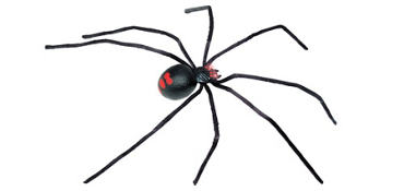 Poseable Black Widow Spider 36in