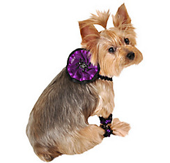 Spider Dog Collar and Cuff Set