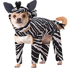 Animal Planet Zebra Dog Costume