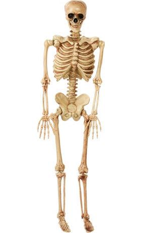 Halloween Skeletons  Skeleton Decorations  Halloween Skulls