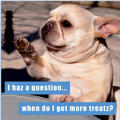 I Haz A Question Loldogs Magnet